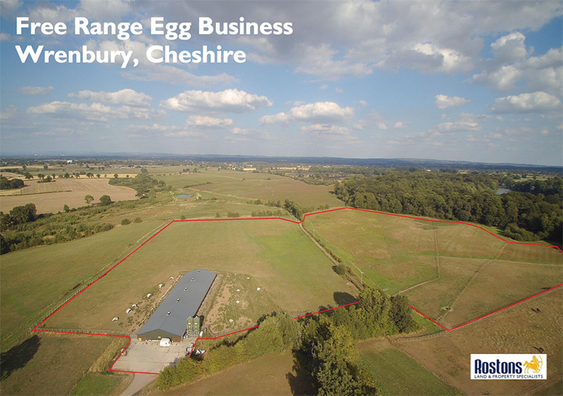 Free Range Egg Business Wrenbury, Cheshire
