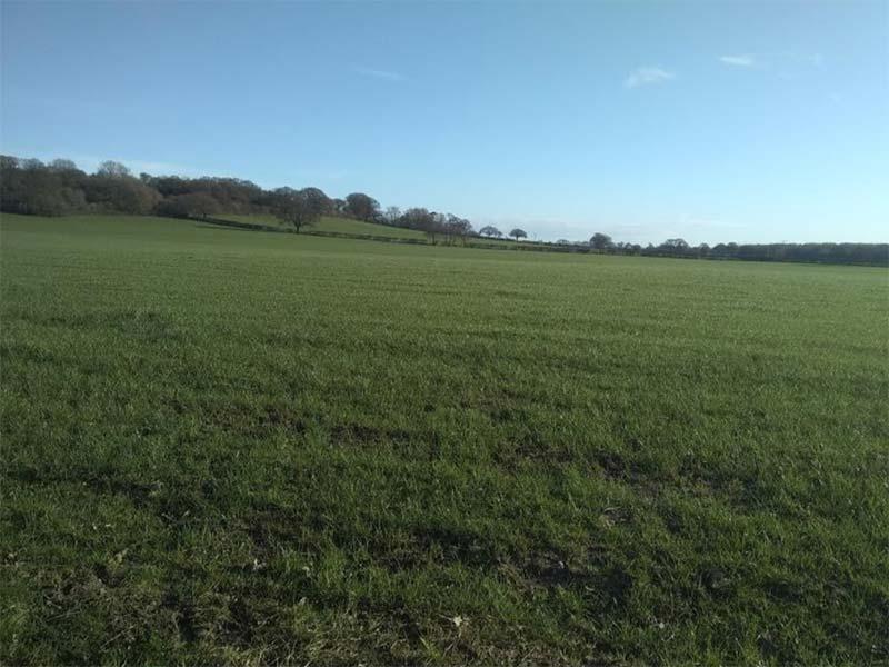 Farm Business Tenancy Opportunity – 173.80 Acres (70.33 Ha) Of Productive Land At Cruckmoor Farm