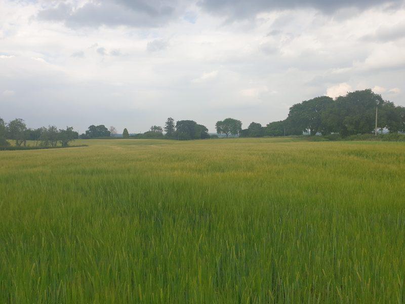 Land at Norley Road/Beech Lane, Kingsley